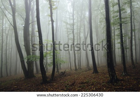 foggy forest in bright light
