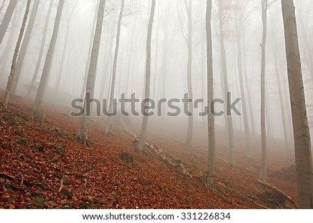 Foggy forest in the autumn - stock photo
