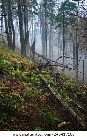 Foggy forest, mystic nature, background - stock photo