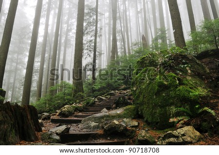 Foggy Forest of Grouse Grind Hiking Trails