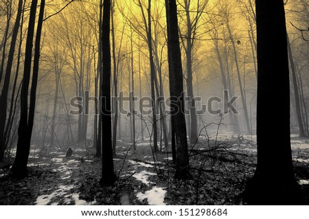 Foggy Forest sunrise and melting snow causing fog. Michigan USA - stock photo