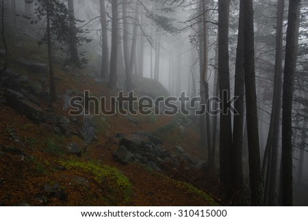 Foggy forest trail in Alps - stock photo