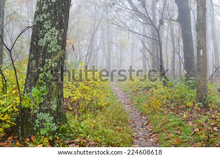 Foggy forest trail in Autumn - Shenandoah National Park - Virginia - stock photo