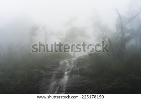 Foggy forest with waterfall - stock photo
