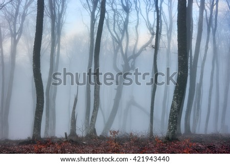Foggy forest. Young beech trees in the high Crimean mountains in the clouds. - stock photo