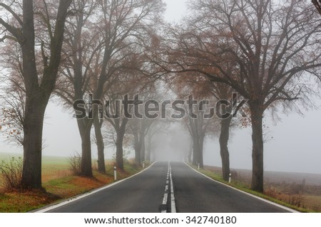 Foggy landscape. Trees with autumn leaves, standing along foggy road