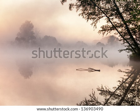 Foggy landscape with a  tree silhouette on a fog at sunrise. - stock photo