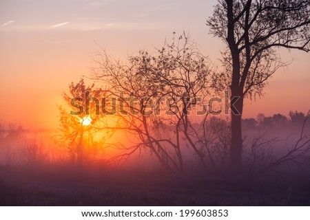 Foggy landscape with a tree silhouette on a fog at sunrise.
