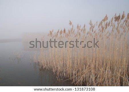 foggy landscape with reeds in the pond - stock photo