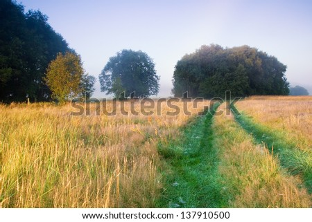 foggy meadow with road landscape. - stock photo