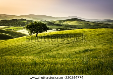 Foggy meadows in the morning, Tuscany - stock photo