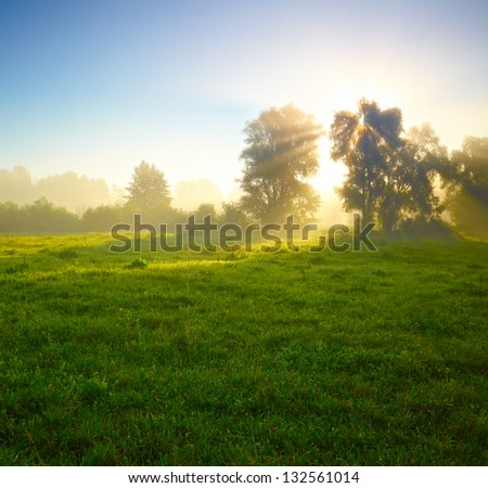 Foggy medow at susrise - stock photo