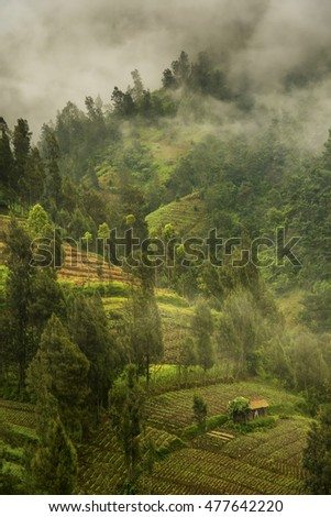 Foggy morning at the agricultural slopes of Bromo volcano, Java, Indonesia