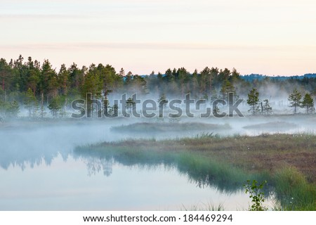 Foggy morning at the forest lake