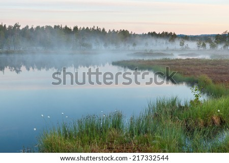 Foggy morning at the forest lake - stock photo