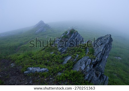 Foggy morning at the mountain peak with blue light and fog and yellow flower
