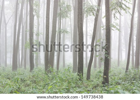 Foggy morning in a floodplain forest - stock photo