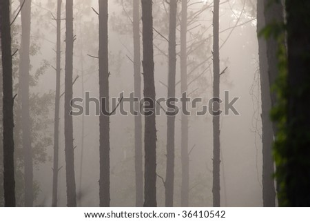 Foggy morning in a wooded Florida swamp - stock photo