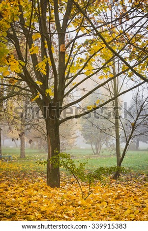 Foggy morning in autumn park with yellow leaves