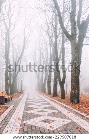 foggy morning in city park - stock photo