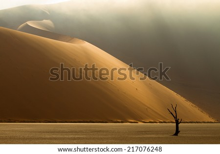 foggy morning in Dead Vlei (Namibia)