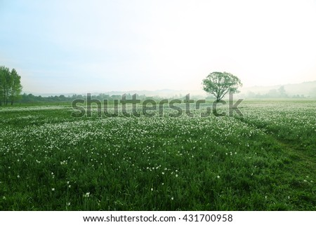 Foggy morning in meadow - stock photo