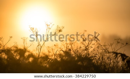 Foggy morning in the meadow with sun in summer