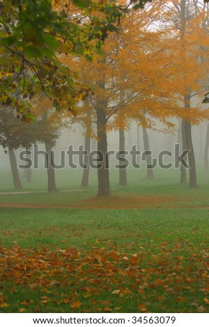 Foggy morning in the park in autumn