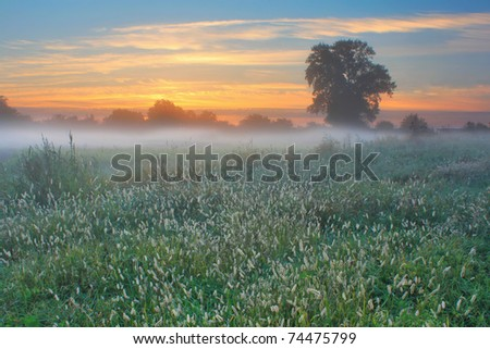 Foggy morning in the spring in a field - stock photo