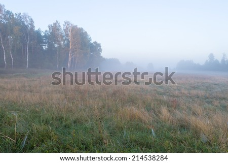 foggy morning meadow