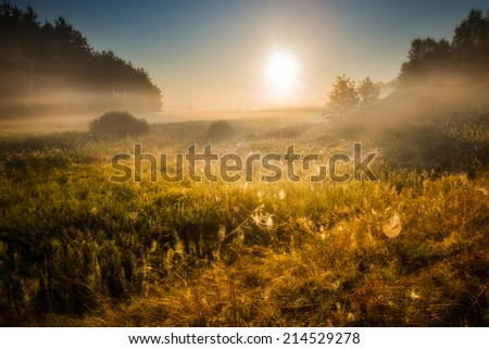 foggy morning on meadow - stock photo
