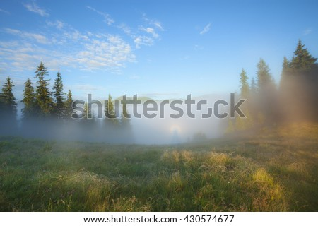 Foggy morning summer countryside landscape