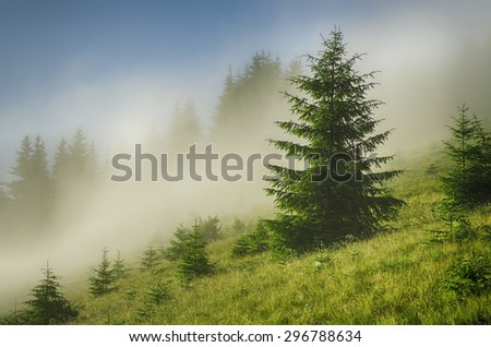 Foggy morning summer landscape with fir tree, seasonal travel background - stock photo