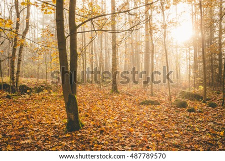 Foggy morning sun light forest nature landscape