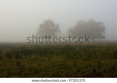 Foggy morning with tree and sun - stock photo