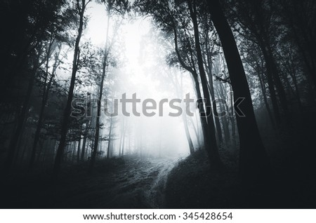 foggy path in the forest - stock photo