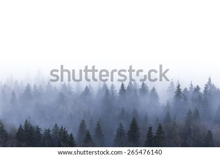 foggy pine forest in Burnaby Mountain park BC Canada  - stock photo