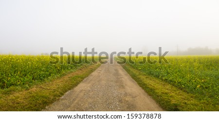 Foggy road in a field of rapeseed in autumn - stock photo