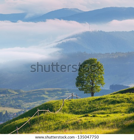 Foggy summer landscape in the mountains - stock photo