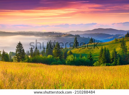 Foggy summer morning in the Carpathian mountains. - stock photo