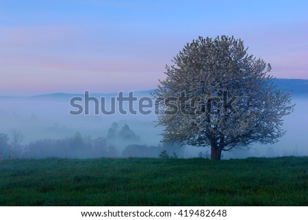 Foggy summer morning in the mountains. Blooming tree on the hill with fog. Tree from Sumava mountain, Czech Republic. Fog in the landscape. Twilight in the landscape with blooming tree. - stock photo