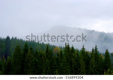 Foggy summer morning in the mountains. Carpathian, Ukraine,