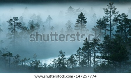 Foggy summer night at the bog - stock photo