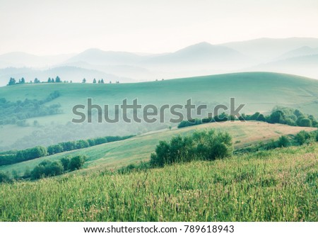 Foggy summer scene of Carpathian mountains. Picturesque morning view of mountain valley in the first sunlight glowing fresh grass, Ukrane, Europe. Instagram filter toned.