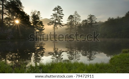 Foggy Sunrise in Forest, North Carolina