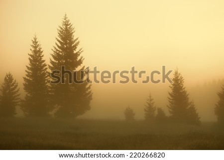 Foggy sunrise with a view on the fir trees in National Park Durmitor - Montenegro - stock photo
