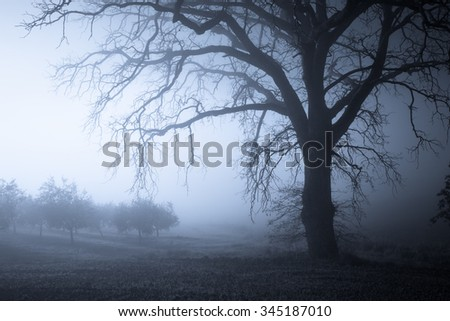 Foggy tree night landscape. Tuscany, Italy, Europe.