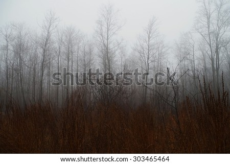 foggy trees in a forest  - stock photo