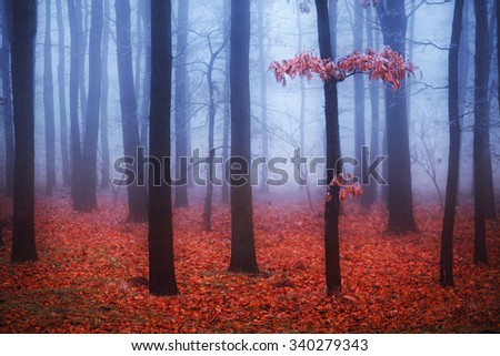 Foggy trees in forest with red leaves and blue mist on background. Selective focus