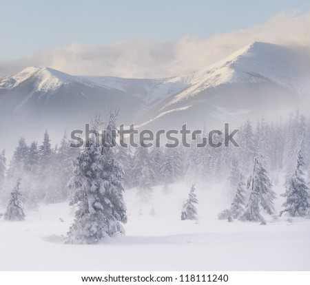 Foggy winter landscape in the mountains